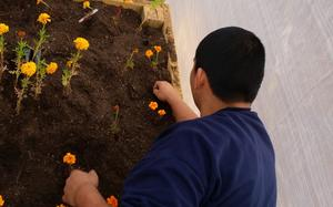 Students planting Marigolds